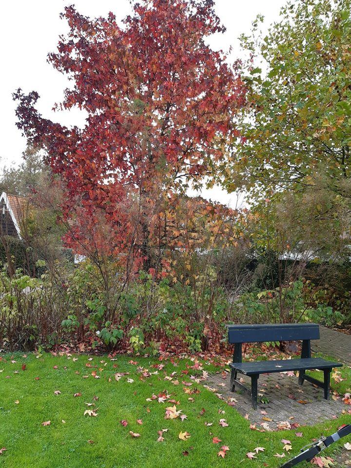 De Amberboom in de Bijbelse Tuin in Hoofddorp