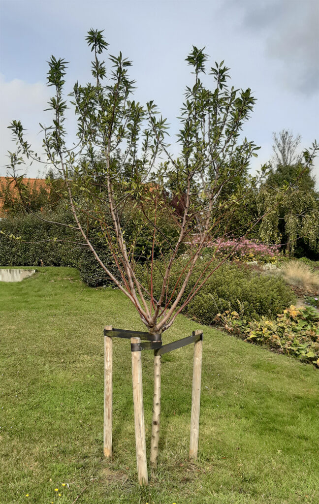 Amandelboom in de Bijbelse Tuin in Hoofddorp